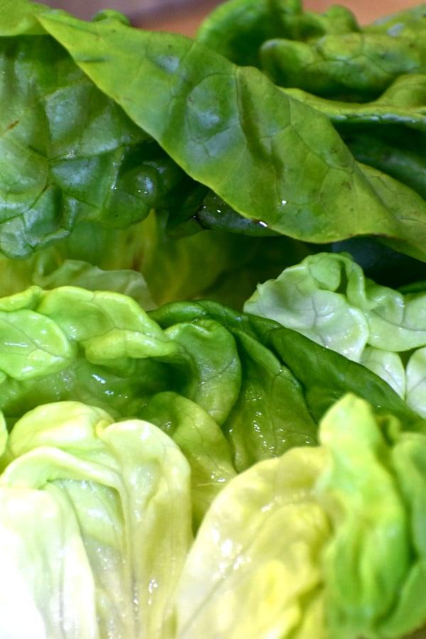 Imagen de cerca de las hojas de lechuga de Boston