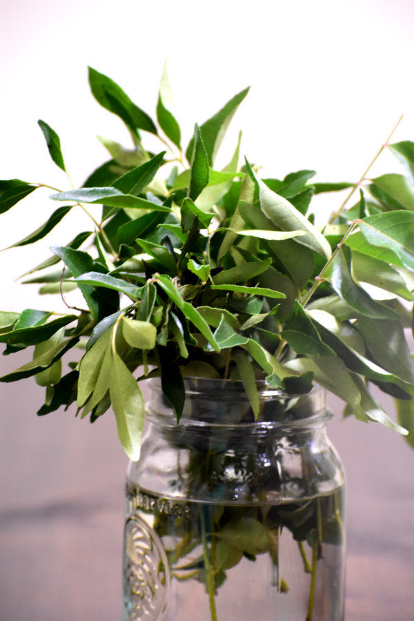 curry leaves in a vase viewed from the side