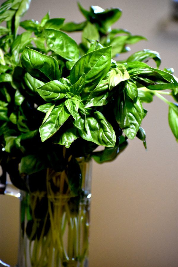 a large batch of basil in a glass vase