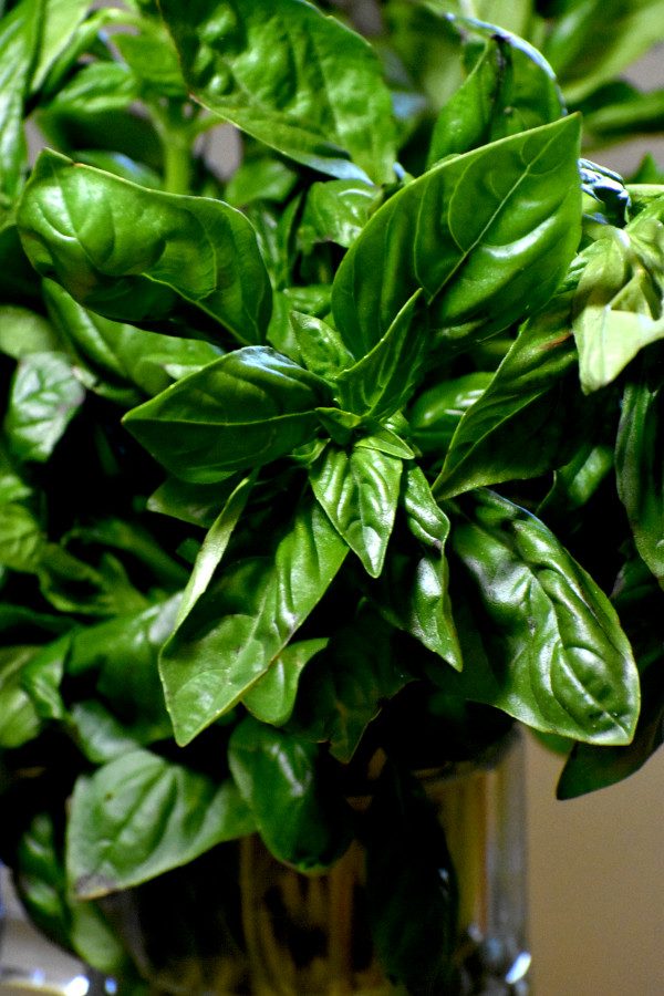 close up image of basil leaves