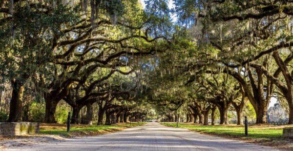 The Avenue of Oaks.