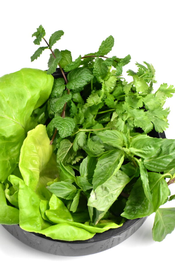 Herbs and lettuce in a bowl.